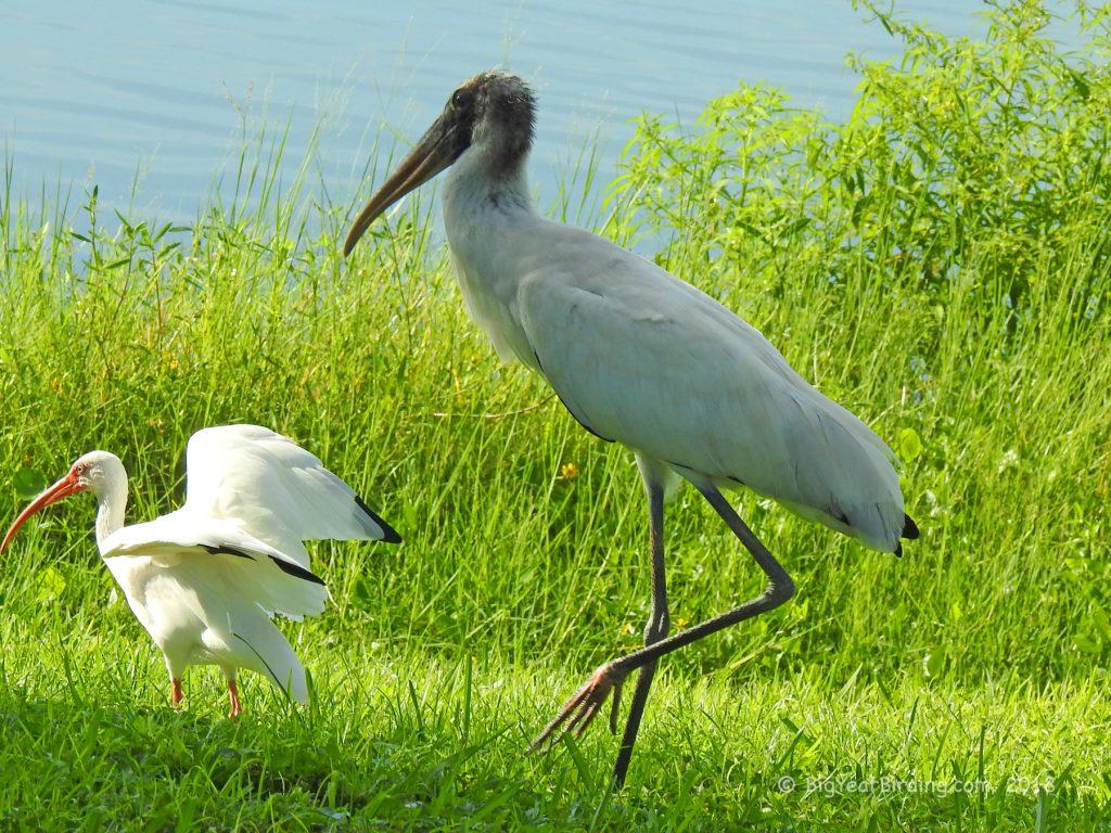 Storks (1)