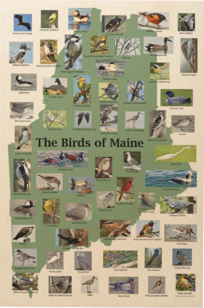 Birds of Maine Wood Wall Art