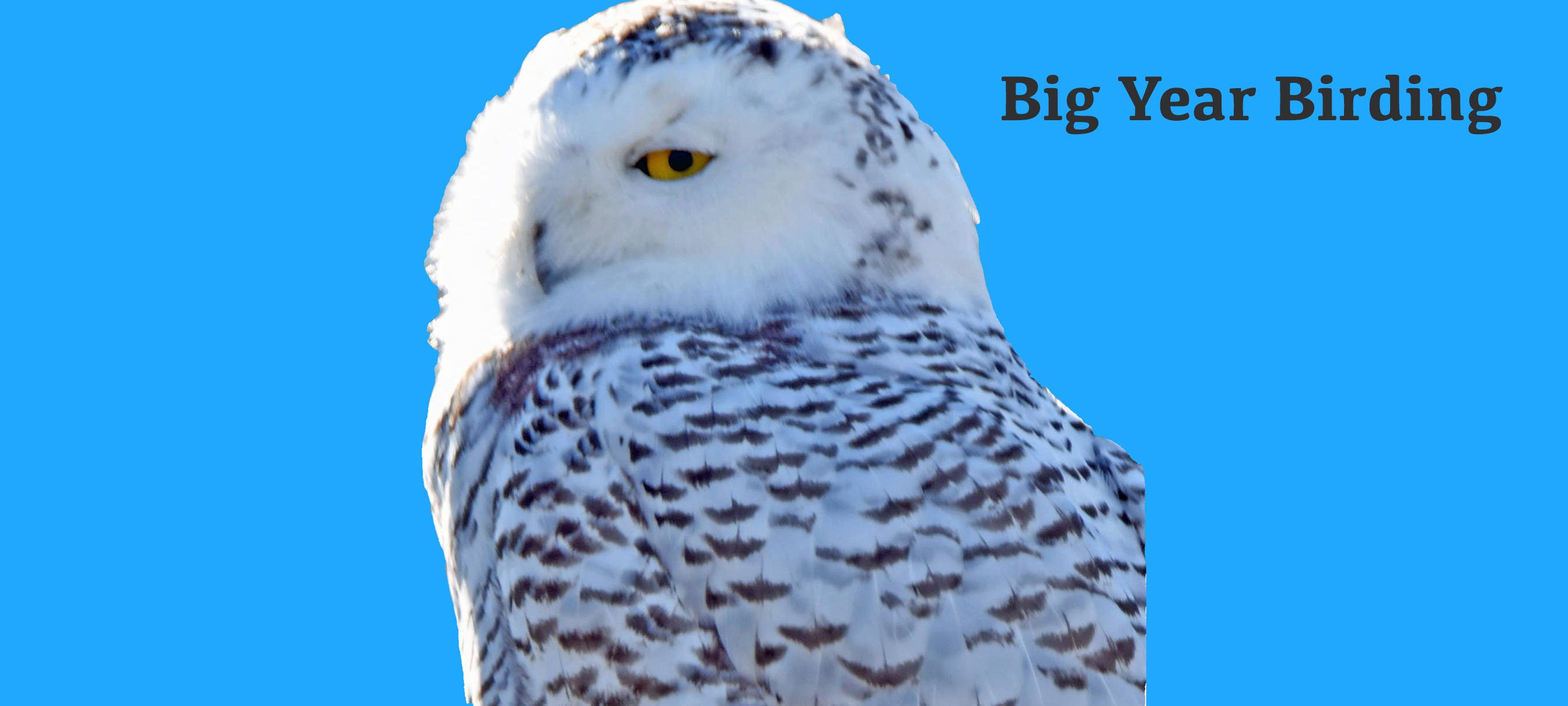Big Year Birding